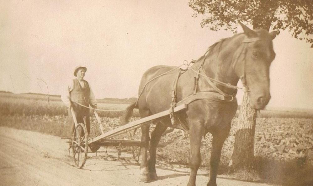 Morfar med hesten